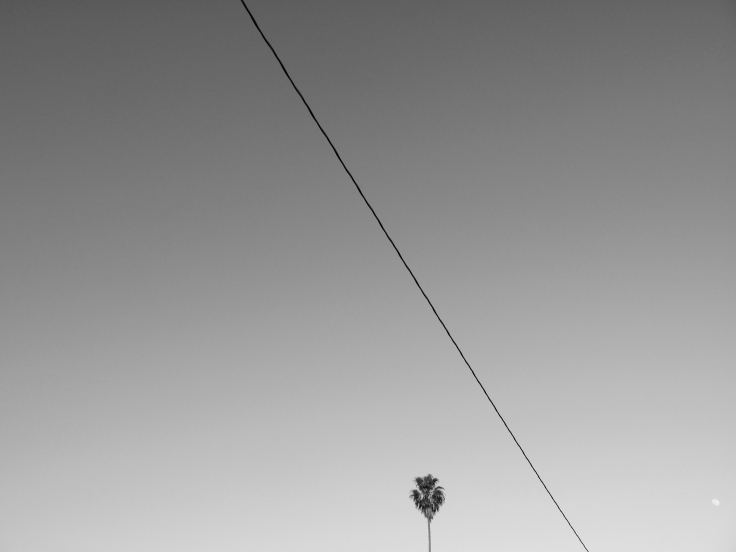 8 palm tree.jpg