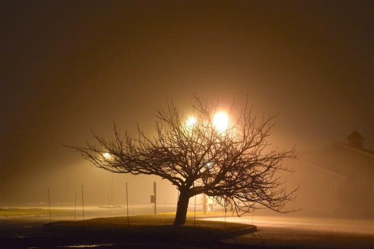 fog_night_tree_light_shadow_silhouette_dark_mist-1187368