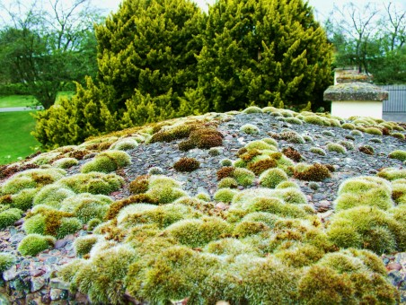 moss_algae_green_growth_nature_texture_surface_green_backgrounds-674434