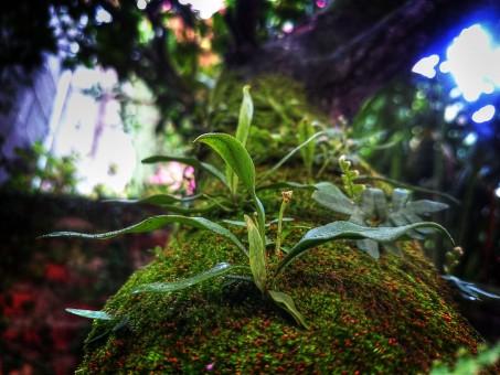 plant_tree_moss_grass-105508